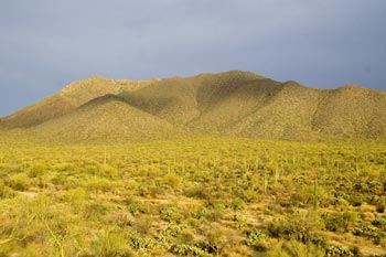 Wasson Peak and Amole Peak in Saguaro National Park Photo