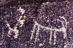 Signal Hill Saguaro National Park Rock Art
