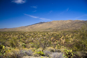 Rincon Mountains in Saguaro National Park East Picture