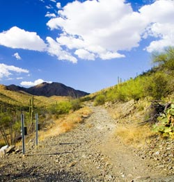 King Canyon Trail Sagauro National Park West Photo
