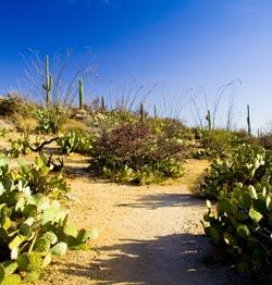 Tanque Verde Trail Saguaro National Park West Photo