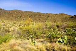 Tanque Verde Ridge Saguaro National Park East