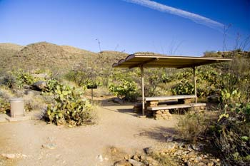 Javelina Picnic Area Picture Saguaro National Park Eastern District