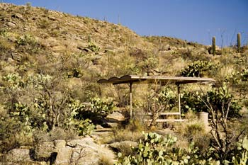 Javalina Picnic Area Saguaro National Park East Photo