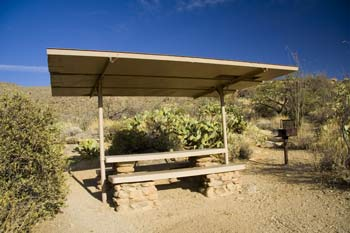 Javeline Picnic Area Saguaro National Park East Picture