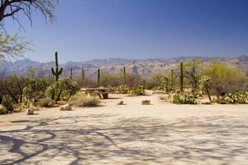 Mica View Picnic Area Photo Saguaro National Park