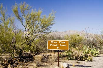 Mica View Picnic Area Saguaro National Park Picture