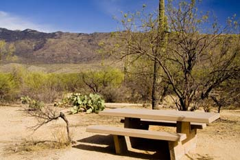 Mica View Picnic Area Saguaro National Park East Photo
