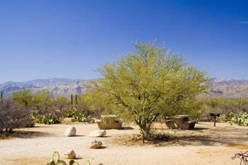 Mica View Picnic Area Photo Saguaro National Park East