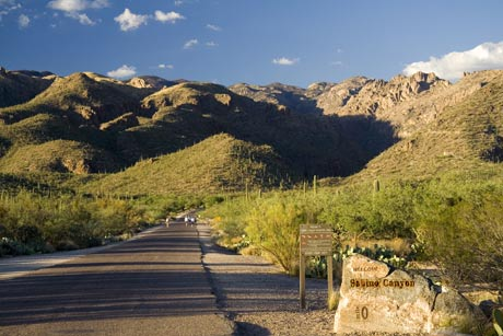Sabino Canyon Recreation Area Picture
