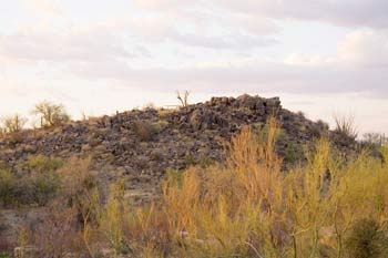 Signal Hill Picnic Area Photo Saguaro National Park